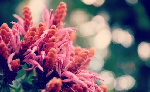 Flickradulau_flowerlight